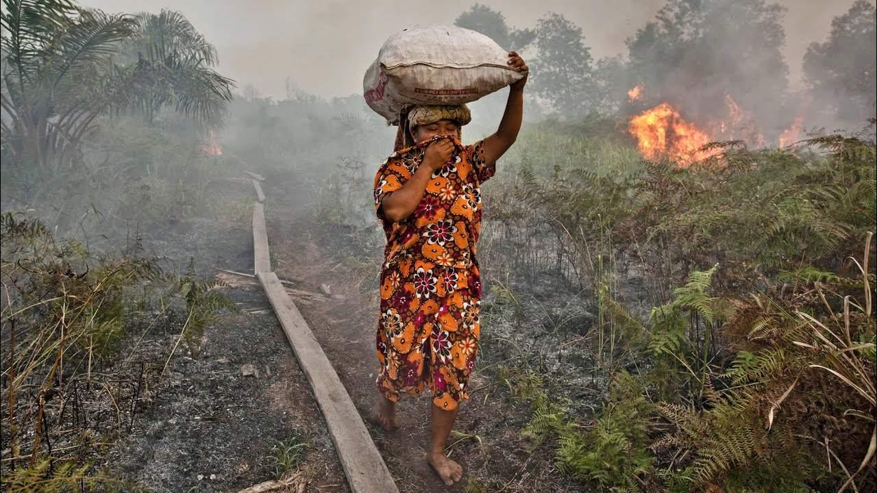 požáry, deštné pralesy